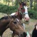 Horses at Cearleesa